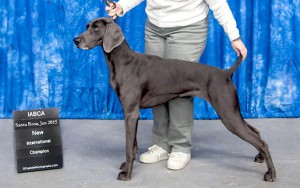 Benelli IABCA Official photo cropped